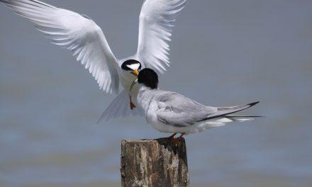 Sous le signe des oiseaux migrateurs